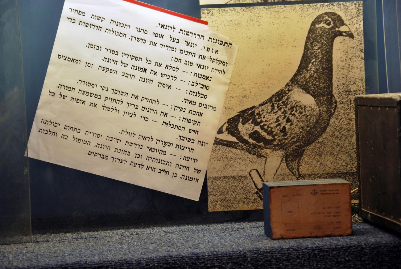 על השימוש הנרחב שנעשה ביוני דואר לאורך ההיסטוריה, בעולם ובישראל